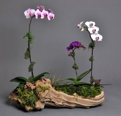 Best Orchid Arrangements With Succulents And Driftwood - Decomagz - Orchideen Orchid Terrarium, Orchid Planters, Orchids Garden, Succulents Garden, Planting Flowers, Terrarium Ideas, Patio Planters, Wooden Planters, Flowers Garden