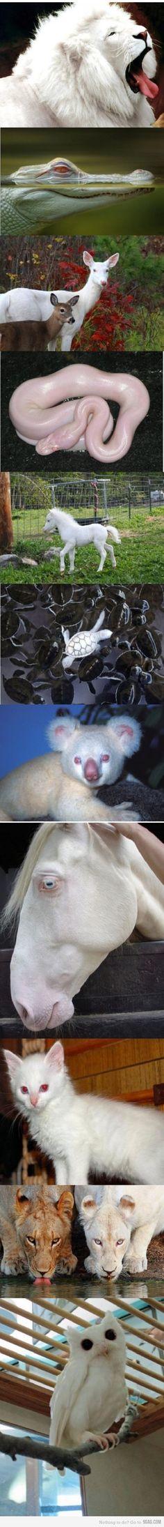 an array of albino creatures