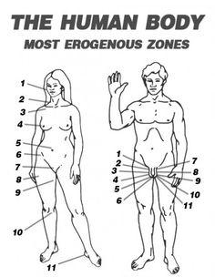 Congratulate, female erogenous zones diagram