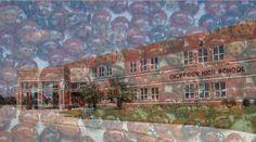 Senior Prank: Maryland Students Release 72,000 Ladybugs At School
