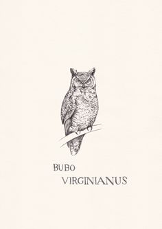 https://flic.kr/p/im14Rg | Bubo Virginianus | 1 of 4 animals from my Taiga Biome mini print set available on my store  WEBSITE  | SHOP