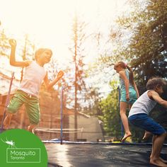 Imagine what it would be like to enjoy a BBQ in your backyard without the annoyance of mosquitoes constantly buzzing around your head and food. Tick Control, Pest Control, Mosquitoes, Ticks, Outdoor Activities, Toronto, Bbq, Backyard, Couple Photos