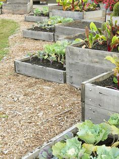 Raised Bed Garden. love the multi tier effect; utilitarian and looks good!