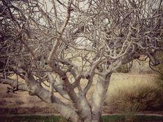 Fruit Tree 2 canvas print