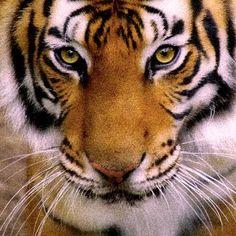 Wildlife - WCS.org