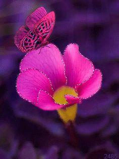 Бабочка на цветке - анимация на телефон №1272871