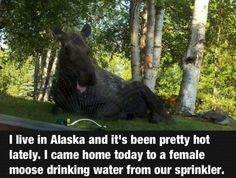 ....I'm going to Alaska. I'm going to make moose friends. and play moose games.