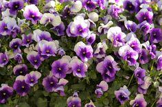 Purple Makes Everything Better! Breakfast Club - Chris Hoffmann - Picasa Web Albums