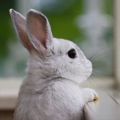 Amazing Rabbit Pictures More at @ Cute Bunny Pictures, Rabbit Pictures, Cute Baby Bunnies, Funny Bunnies, Animals And Pets, Funny Animals, Wild Animals, Photo Chat, Cute Little Animals