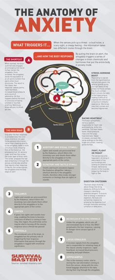 Anatomy of Anxiety www.pinterest.com/mentallyinteresting/anxiety-facts?utm_content=buffer00e2f&utm_medium=social&utm_source=pinterest.com&utm_campaign=buffer