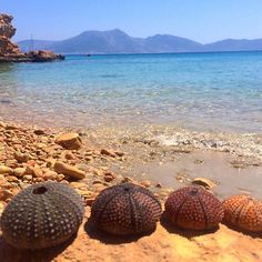Snorkelling fun  #urchin #seaurchin #diving #snorkelling #fun #swim #cave  #stones #sea #blue #clear #stunning #paradise #greecebeauties #summertimesadness #summerblues #imissgreece #greekisland #koufonisia #instalove #greece #greeksummer  #greecetravelgr #throwback #greeklife #travel #europe #instadaily #instagood by pri1556