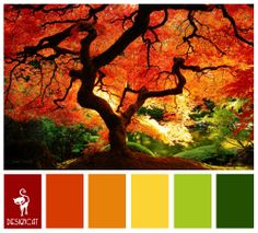 Autumn 4: Red, Terracotta, Orange, Yellow, Green - Colour Inspiration Pallet