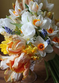 Orange & white parrot tulips mixed with heirloom daffodils, narcissus and little blue muscari by Amy Merrick for Studio Choo - Bride's bouquet Beautiful Flower Arrangements, Fresh Flowers, Spring Flowers, Floral Arrangements, Beautiful Flowers, Gorgeous Gorgeous, Tall Flowers, Spring Colors, Parrot Tulips