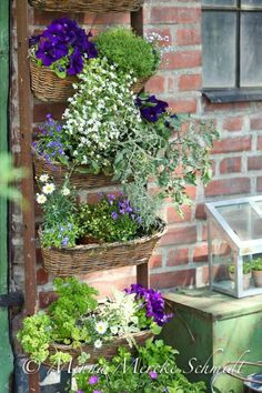 Whimsical display and usage of an old ladder .. #shabby chic #gardening #outdoors
