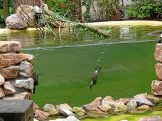 If it was affordable, an awesome idea for diving ducks in an aviary.  Also, in a different setting, turtles, alligators, & other aquatics.