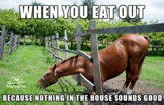 :) What Do you think I Think this is too cute - Horses Funny - Funny Horse Meme - - What Do you think I Think this is too cute The post :) What Do you think I Think this is too cute appeared first on Gag Dad. Funny Horse Memes, Funny Horse Pictures, Funny Animal Jokes, Funny Horses, Cute Horses, Cute Funny Animals, Horse Humor, Funny Quotes, Equestrian Memes