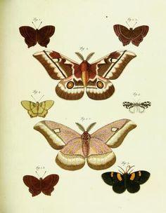 1782 - Supplement - De uitlandsche kapellen voorkomende in de drie waereld-deelen, Asia, Africa en America, - Biodiversity Heritage Library