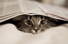 I wonder where the kitty is? @Hannah Zondlak