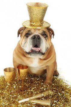 hallmark card English bulldog - Google Search