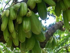 Bilimbi Fruit