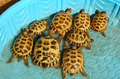 Keeping tortoises cool on hot days