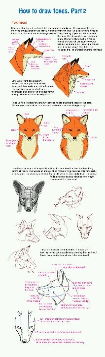 Help you draw foxes