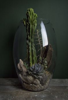 Learning how to make the perfect succulent terrarium decoration for your home can be difficult. Succulent Gardening, Cacti And Succulents, Planting Succulents, Planting Flowers, Cactus House Plants, Cactus Terrarium, Paludarium, Vivarium, Bottle Garden