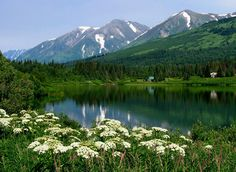 #Alaska #beautiful #serene #clearwater #flowers #cold #mountains #snow #pinetrees #woods #freshair