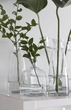 glass vases and plants