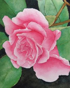 "pink rose watercolor rose archival print of original painting 8"" x 10"""