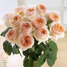 David-Austin-Juliet Juliet Garden Rose, Juliet Roses, Diy Wedding Flowers, Rose Wedding, Wedding Ideas, Wedding Bouquets, Wedding Decor, Wedding Stuff, Elegant Flowers