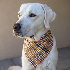 Classic Fall Bandana by DogCharms on Etsy