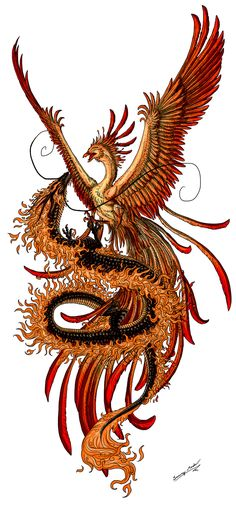 Phoenix and dragon by Sunimo.deviantart.com on @deviantART