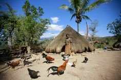 Traditional Home in Bertakefe, East Timor   by United Nations Photo