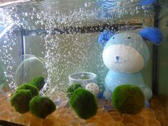 The Power of Marimo to Heal a Broken Heart   MossBall.com...Club Soda and Carbon Dioxide Levels. Interestingly, immersing Marimo Moss Balls in club soda water will raise carbon dioxide levels, which will boost their growth. However, this technique should not be used in a tank that contains other species.