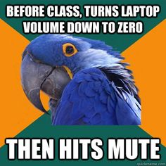 before class turns laptop volume down to zero then hits mut - Paranoid Parrot