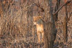 Kamerun Animals, Animales, Animaux, Animal, Animais
