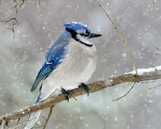 51 Best Winter Bird Photos Ever - Birds and Blooms