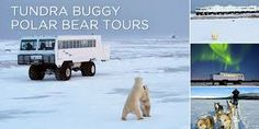 One day...polar bears in canada tours churchill - Google Search