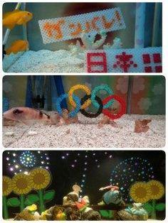 こんなに小さいの海の生き物達がこの夏のオリンピック日本を応援してくられています()  がんばれ日本!!!!   #マリンワールド#オリンピック応援 tags[熊本県]