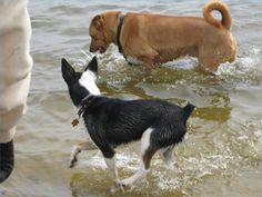 A healthy dog should not have much of an odor at all.