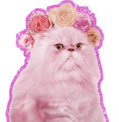 Grumpy Glitter Cat. Das ist so ein Metameme oder so... (via antiprodukt)