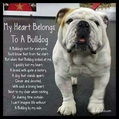 Heart belongs to my bulldog
