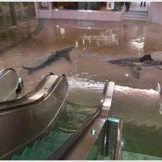 the collapse of a shark tank at the scientific center in kuwait. hahaha, this is great.