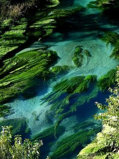 ✯ Clear waters of Te Waihou River in North Island, New Zealand