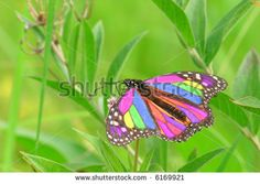 butterfly pastel and gouache - Google Search