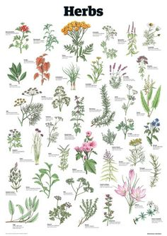 Herbs - Guardian Wallchart Prints - Easyart.com