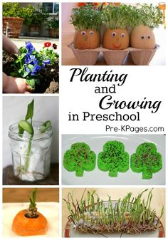 Science for Kids: Planting and Growing Seeds and Kitchen Scraps with Kids in Preschool. Perfect for learning about how things grow at home or in the classroom. Get your kids excited about science with these fun activities! - Pre-K Pages Kid Science, Kindergarten Science, Science Experiments, Earth Science, Kindergarten Classroom, Early Years Classroom, Science Lessons, Teaching Science, Teaching Kids