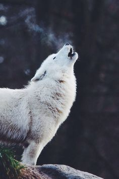 Have you ever wondered what animal you feel most connected with? Maybe a wolf, or a fox? Find out your spirit animal and let your spirit soar! IM A 🐺 WOLF! YAASSS MY FAV ANIMAL Whats Your Spirit Animal, My Spirit Animal, Animals And Pets, Funny Animals, Cute Animals, Strange Animals, Beautiful Creatures, Animals Beautiful, Wolf Love