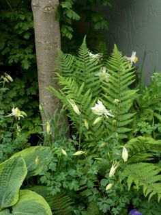 My Favorite Plant Combinations 19